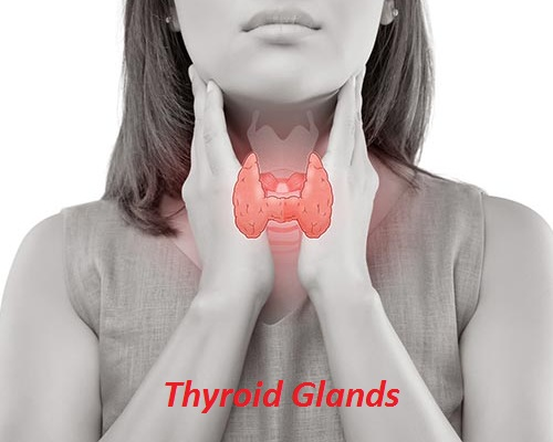 Best Remedies for Thyroid Glands